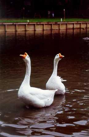 duck05.jpg