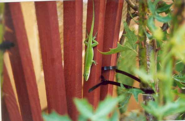 lizard01.jpg